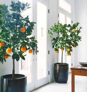 Orange Trees - image via Coco + Kelley