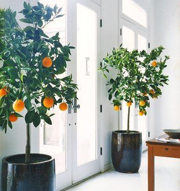 Orange Trees - image via Coco + Kelley